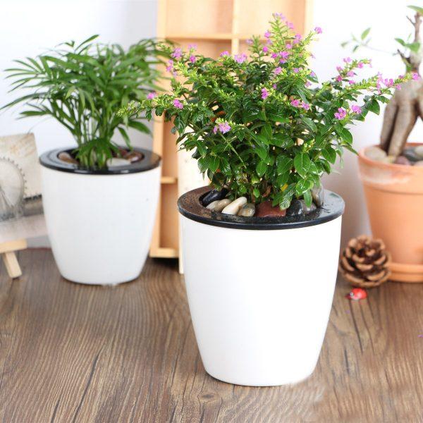 Evinizin içinde bakacağınız bitkiler ve saksı modelleri 21
