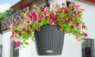 Evinizin içinde bakacağınız bitkiler ve saksı modelleri