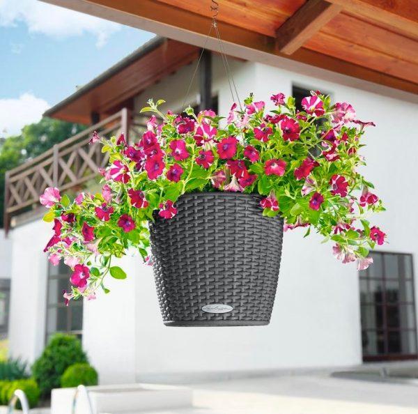 Evinizin içinde bakacağınız bitkiler ve saksı modelleri 72
