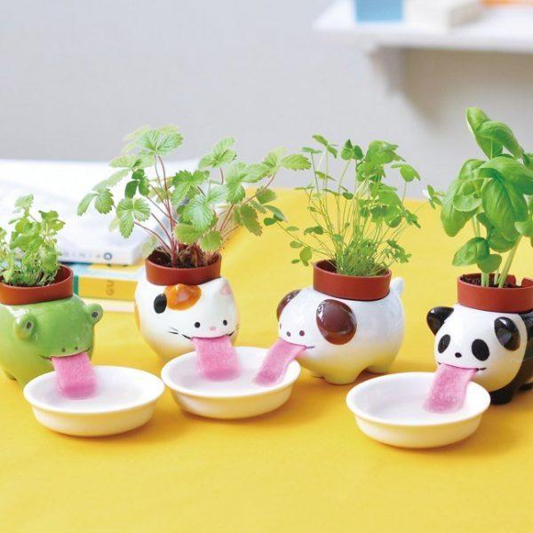Evinizin içinde bakacağınız bitkiler ve saksı modelleri 34
