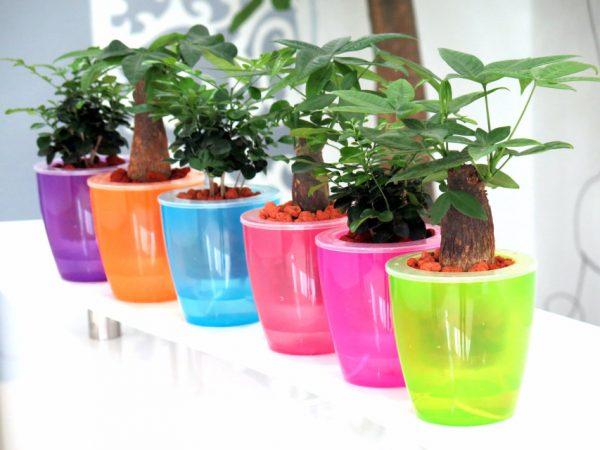 Evinizin içinde bakacağınız bitkiler ve saksı modelleri 35