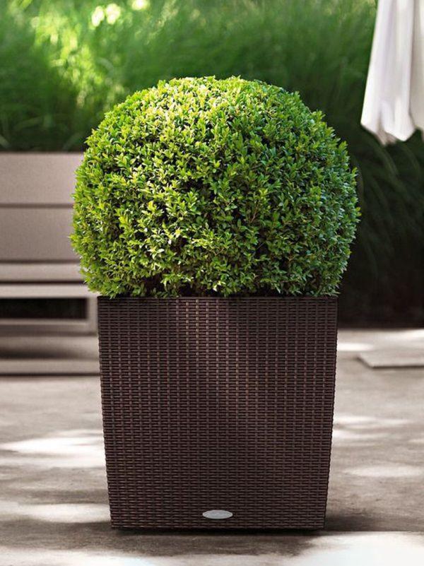 Evinizin içinde bakacağınız bitkiler ve saksı modelleri 36
