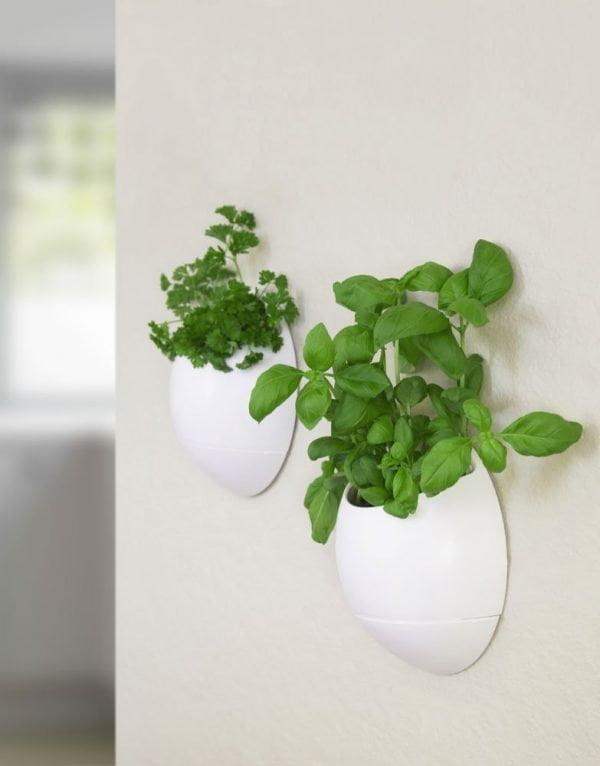 Evinizin içinde bakacağınız bitkiler ve saksı modelleri 22