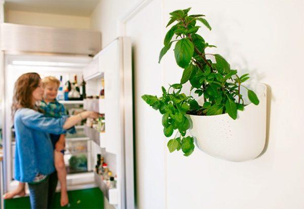 Evinizin içinde bakacağınız bitkiler ve saksı modelleri 23