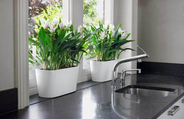 Evinizin içinde bakacağınız bitkiler ve saksı modelleri 24