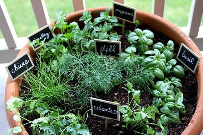 Bitki Bahçeleri Oluşturma Fikirleri
